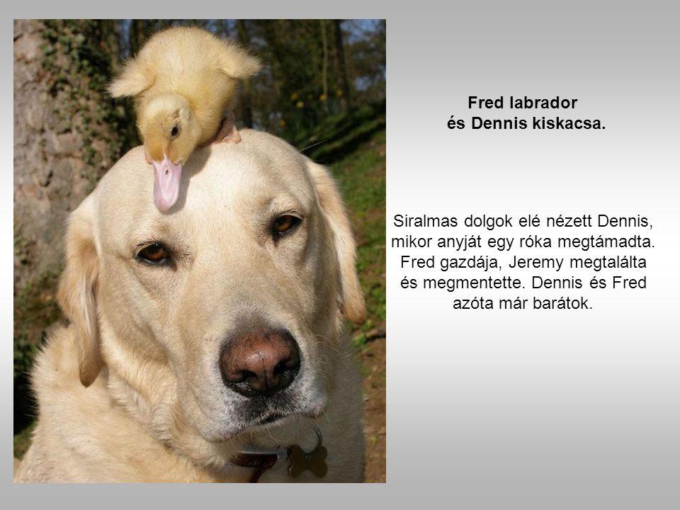 A kutya és a bagoly elválaszthatatlan barátok lettek.