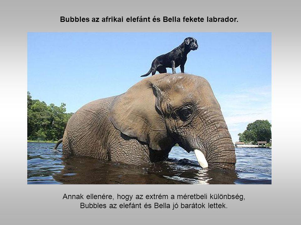 Valószínűtlen barátságok állatok közt Az állatok sem rosszabbak, mint az emberek, sőt.