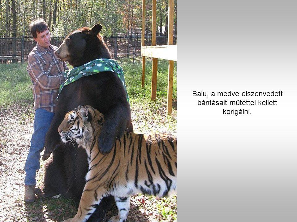 Sir Kán a tigris, Balu a medve és Leo az oroszlán.