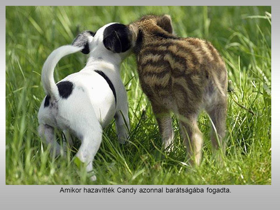 Manni a vaddisznó és Candy a kutya.