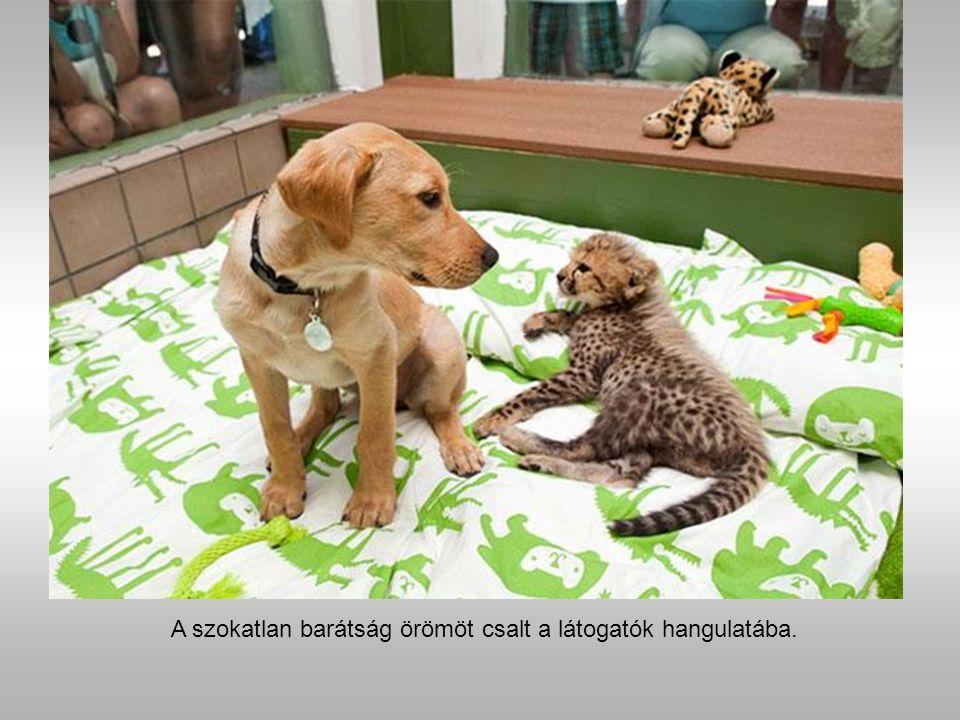 Kasi a gepárd és Mtani a labrador. Kasi és Mtani barátsága is a Bush Gardenben jött létre.