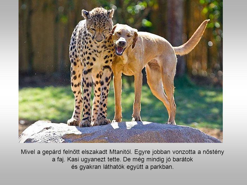 A szokatlan barátság örömöt csalt a látogatók hangulatába.