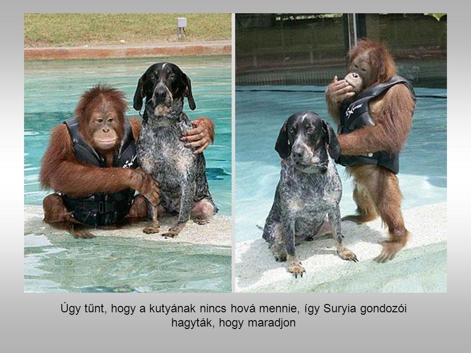 Suryia az orángután és Roscoe kutya.