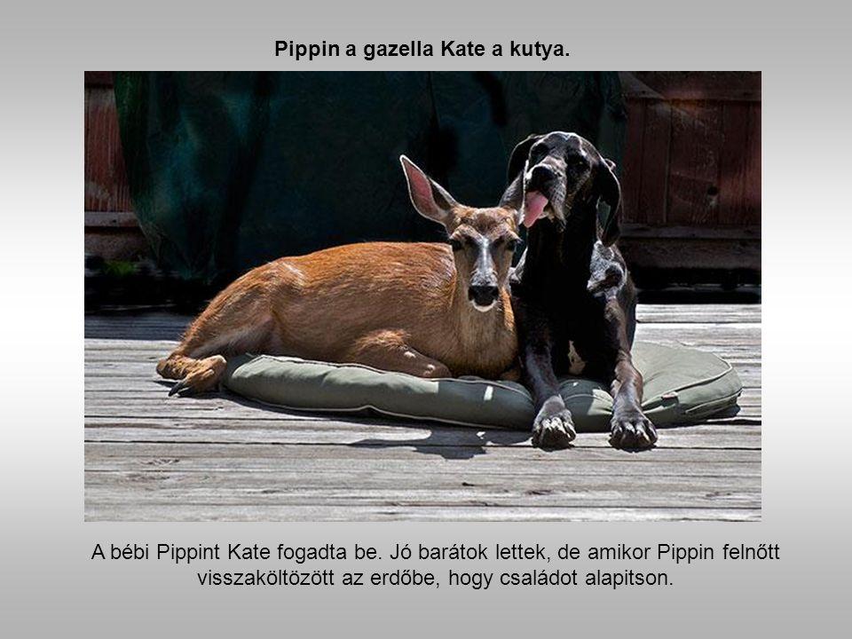 És az állatok fő partnerek lettek a kellemes pillanatokban.