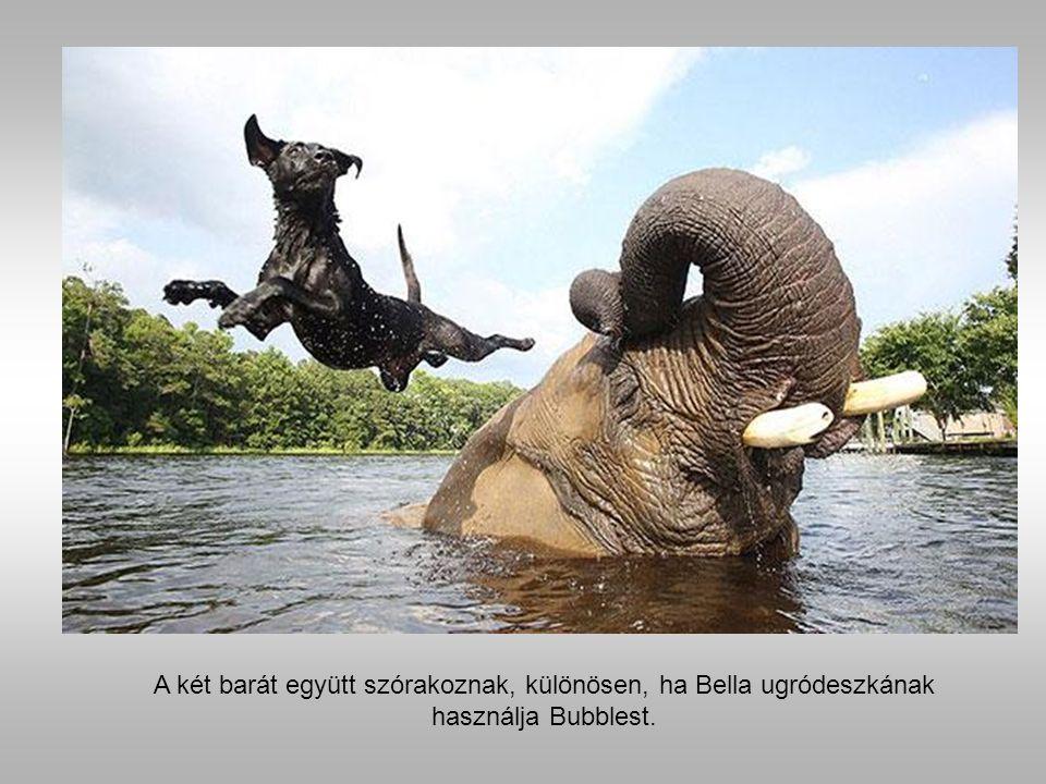 Bubbles egy afrikai szafari során mentették meg az elefántcsont vadászok elől, és került egy vállalkozó parkjába, ahol történetesen Bella is élt.