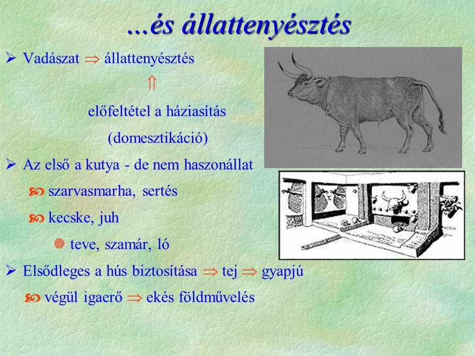 …és állattenyésztés  Vadászat  állattenyésztés  előfeltétel a háziasítás (domesztikáció)  Az első a kutya - de nem haszonállat  szarvasmarha, sertés  kecske, juh  teve, szamár, ló  Elsődleges a hús biztosítása  tej  gyapjú  végül igaerő  ekés földművelés