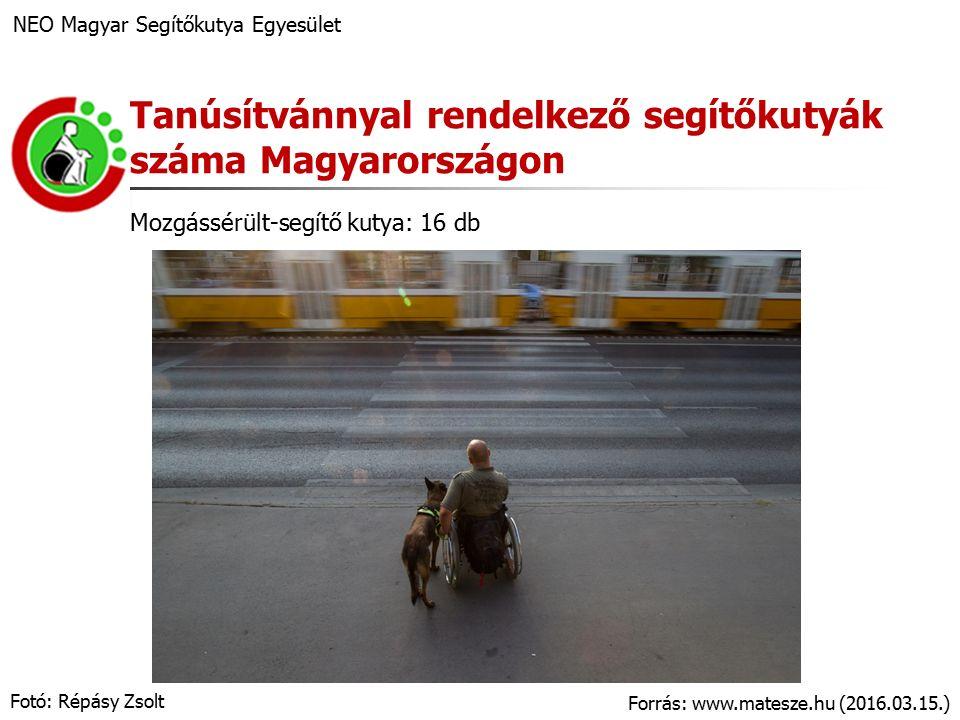 A kezdetek… NEO Magyar Segítőkutya Egyesület Aktív, fogyatékossággal élő tagok Személyes tapasztalatok (pl.