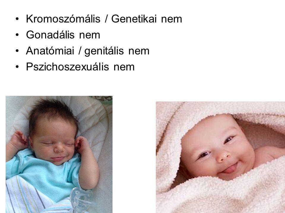 Kromoszómális / Genetikai nem Gonadális nem Anatómiai / genitális nem Pszichoszexuális nem