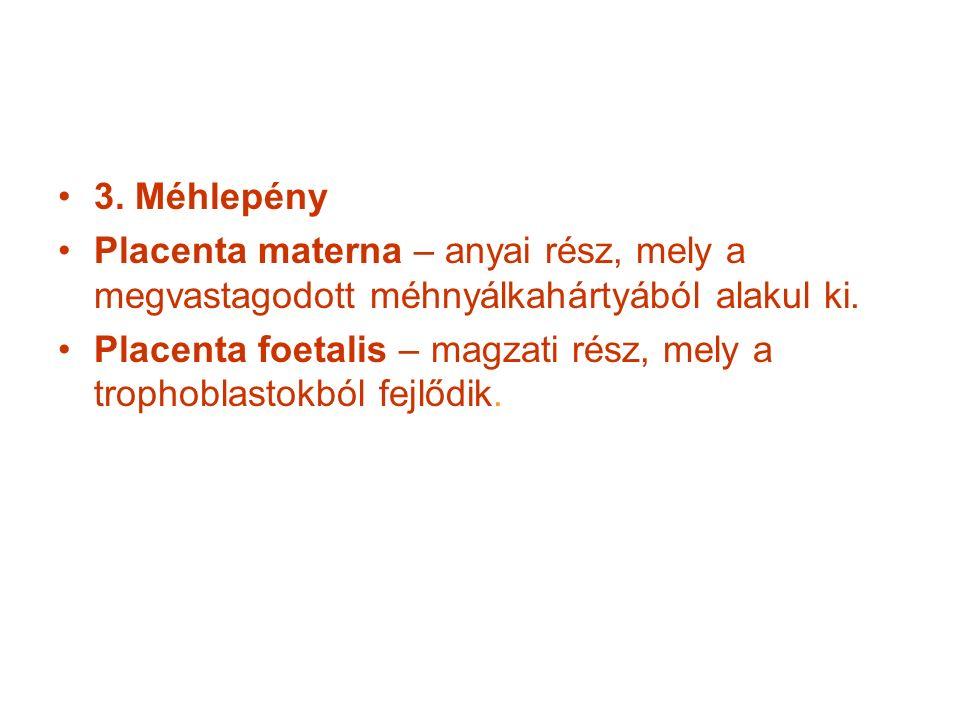 3. Méhlepény Placenta materna – anyai rész, mely a megvastagodott méhnyálkahártyából alakul ki.