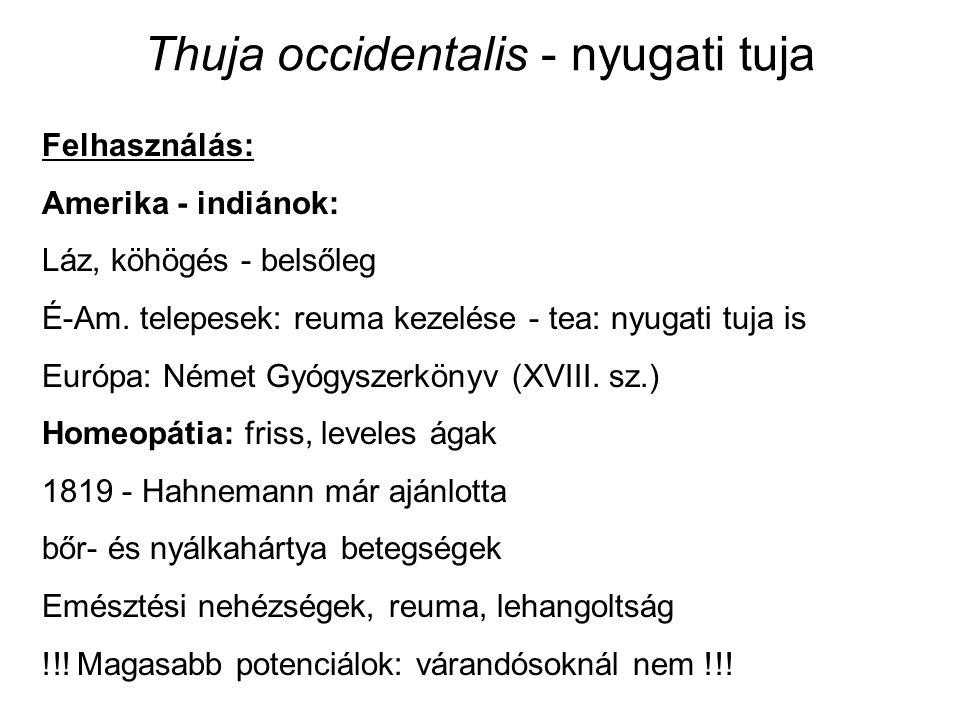 Thuja occidentalis - nyugati tuja Felhasználás: Amerika - indiánok: Láz, köhögés - belsőleg É-Am.