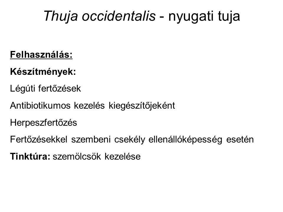 Thuja occidentalis - nyugati tuja Felhasználás: Készítmények: Légúti fertőzések Antibiotikumos kezelés kiegészítőjeként Herpeszfertőzés Fertőzésekkel szembeni csekély ellenállóképesség esetén Tinktúra: szemölcsök kezelése