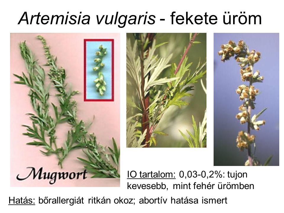 Artemisia vulgaris - fekete üröm IO tartalom: 0,03-0,2%: tujon kevesebb, mint fehér ürömben Hatás: bőrallergiát ritkán okoz; abortív hatása ismert