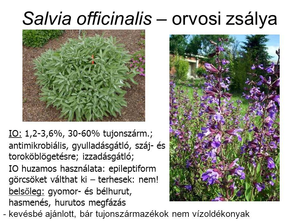 Salvia officinalis – orvosi zsálya IO: 1,2-3,6%, 30-60% tujonszárm.; antimikrobiális, gyulladásgátló, száj- és toroköblögetésre; izzadásgátló; IO huzamos használata: epileptiform görcsöket válthat ki – terhesek: nem.