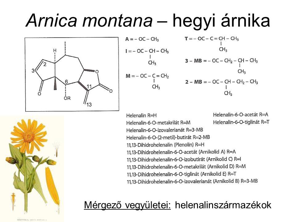Arnica montana – hegyi árnika Mérgező vegyületei: helenalinszármazékok
