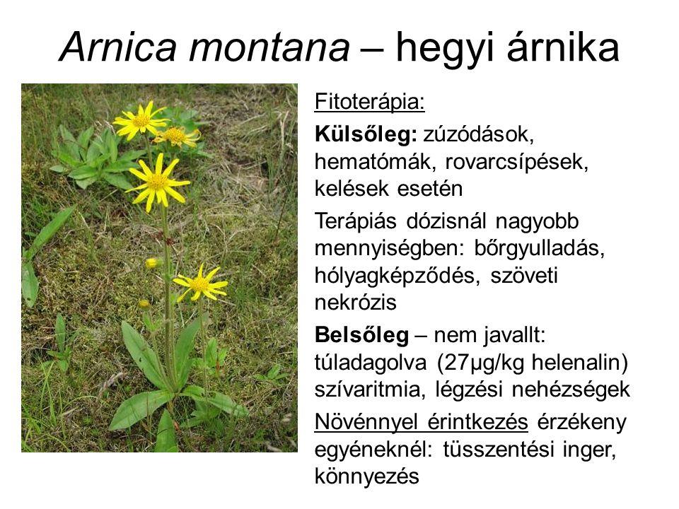 Arnica montana – hegyi árnika Fitoterápia: Külsőleg: zúzódások, hematómák, rovarcsípések, kelések esetén Terápiás dózisnál nagyobb mennyiségben: bőrgyulladás, hólyagképződés, szöveti nekrózis Belsőleg – nem javallt: túladagolva (27μg/kg helenalin) szívaritmia, légzési nehézségek Növénnyel érintkezés érzékeny egyéneknél: tüsszentési inger, könnyezés