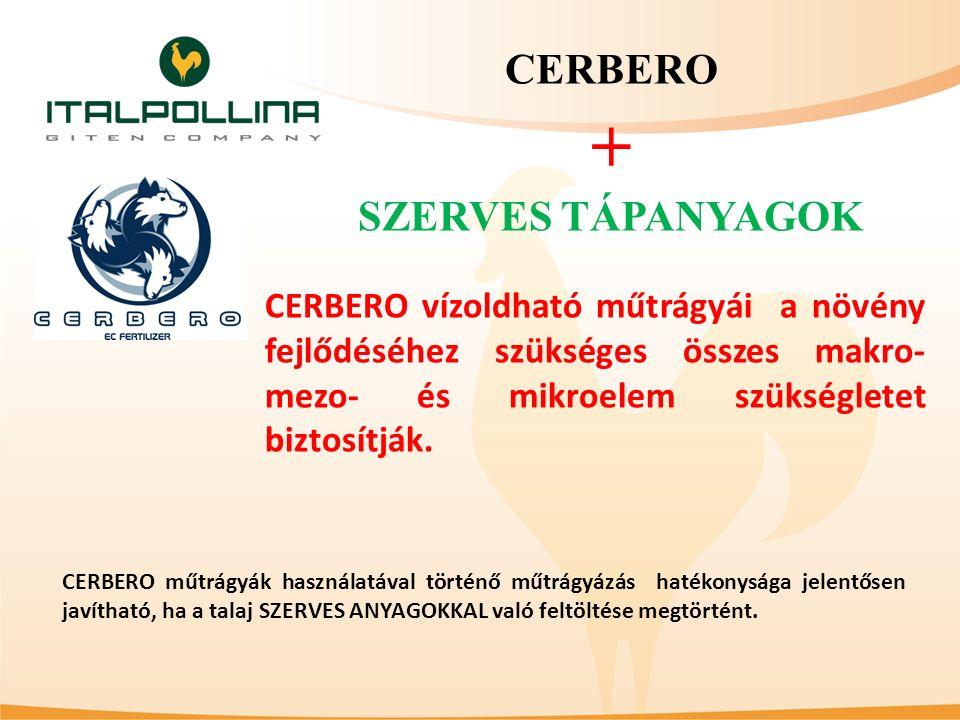 ITALPOLLINA szerves tápanyagok és CERBERO műtrágyák párhuzamos használata teljes értékű, kiegyensúlyozott és egyenletes tápláló anyag ellátást biztosít minden kertészeti kultúra számára.
