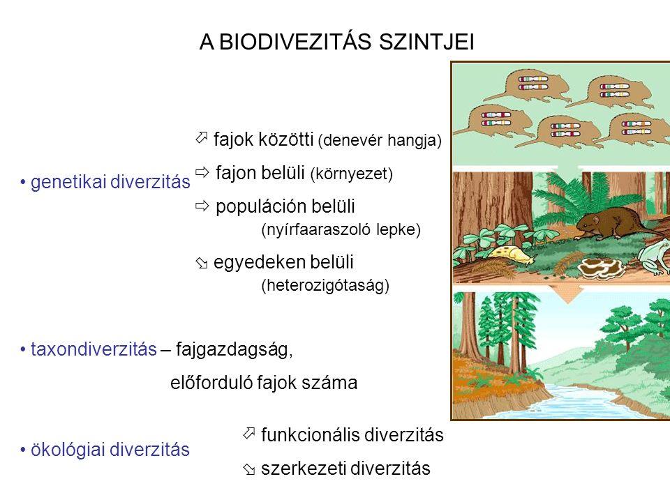 A BIODIVEZITÁS SZINTJEI genetikai diverzitás taxondiverzitás – fajgazdagság, előforduló fajok száma ökológiai diverzitás  fajok közötti (denevér hangja)  fajon belüli (környezet)  populáción belüli (nyírfaaraszoló lepke)  egyedeken belüli (heterozigótaság)  funkcionális diverzitás  szerkezeti diverzitás