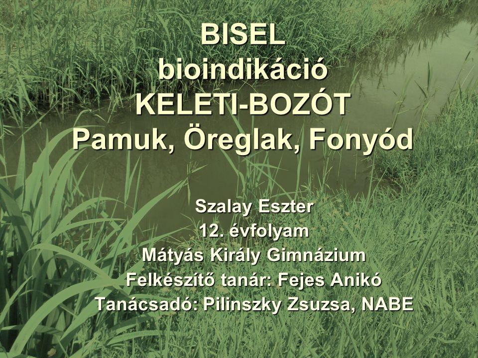 BISEL bioindikáció KELETI-BOZÓT Pamuk, Öreglak, Fonyód Szalay Eszter 12.