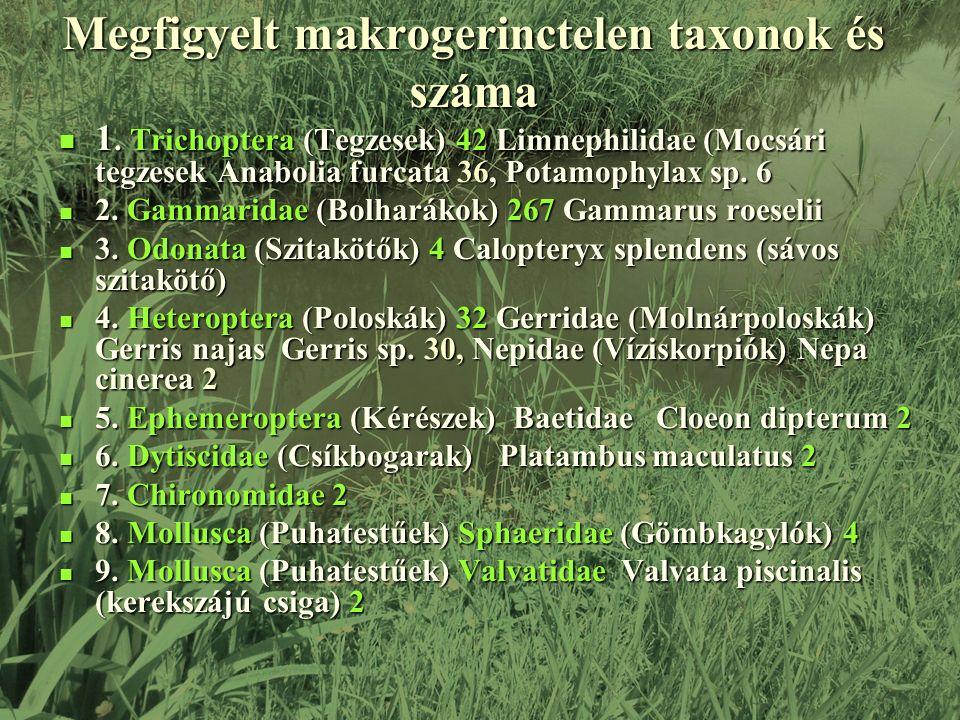 Megfigyelt makrogerinctelen taxonok és száma 1.