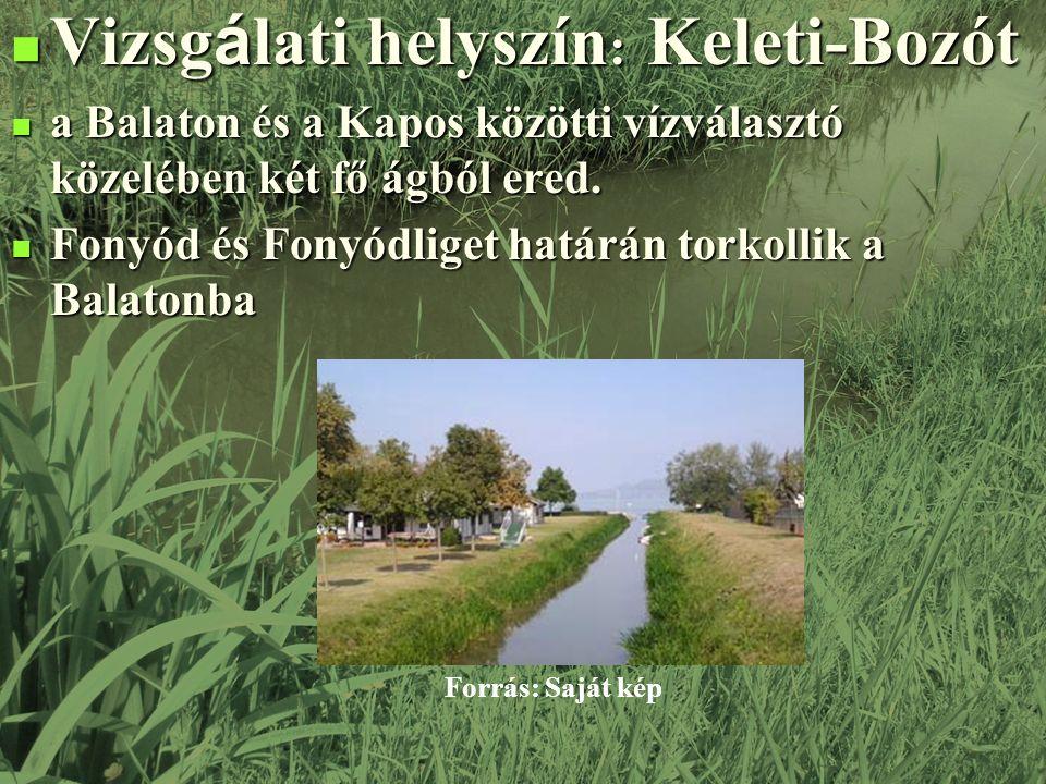 Vizsg á lati helyszín : Keleti-Bozót Vizsg á lati helyszín : Keleti-Bozót a Balaton és a Kapos közötti vízválasztó közelében két fő ágból ered.