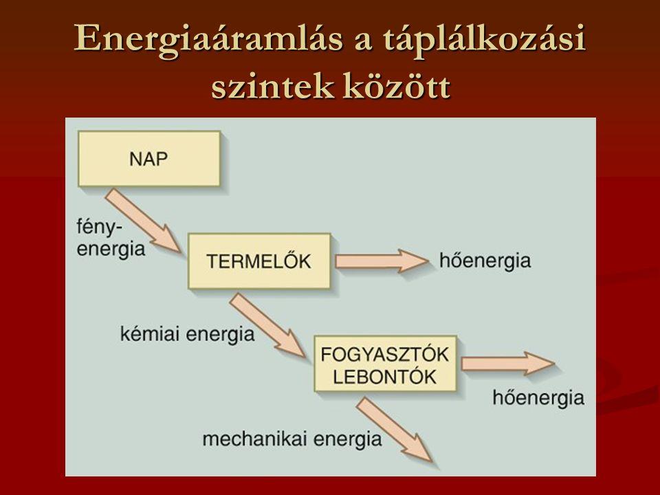 Energiaáramlás a táplálkozási szintek között
