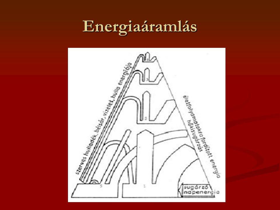Energiaáramlás
