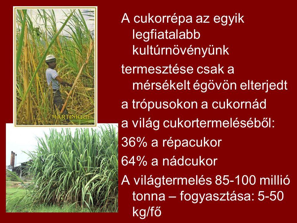 A cukorrépa az egyik legfiatalabb kultúrnövényünk termesztése csak a mérsékelt égövön elterjedt a trópusokon a cukornád a világ cukortermeléséből: 36% a répacukor 64% a nádcukor A világtermelés 85-100 millió tonna – fogyasztása: 5-50 kg/fő