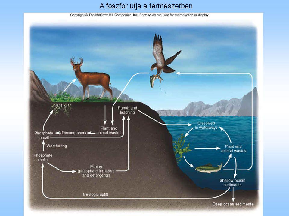 A foszfor útja a természetben