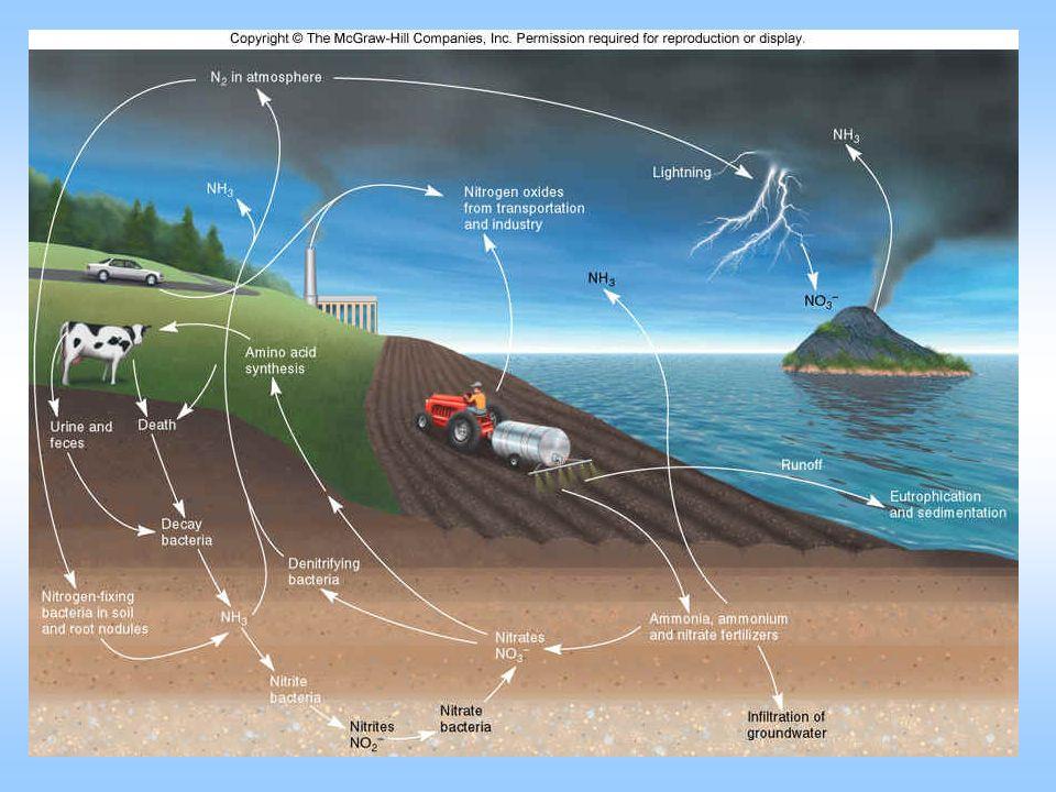 Szervesanyag-körforgalom (aerob lebomlás=CO 2 emisszió) 0-30 cm réteg×1 ha = 3000 m 3 talaj = 4500 t/ha 2% szervesanyag-tartalom = 90 t/ha szervesanyag Évi 1% ásványosodás = 0,9 t/ha 900 kg szervesanyag = 45 kg N és 522 kg C/ha (1914 kg CO 2 /ha) Magyarország szántóterületén kb.