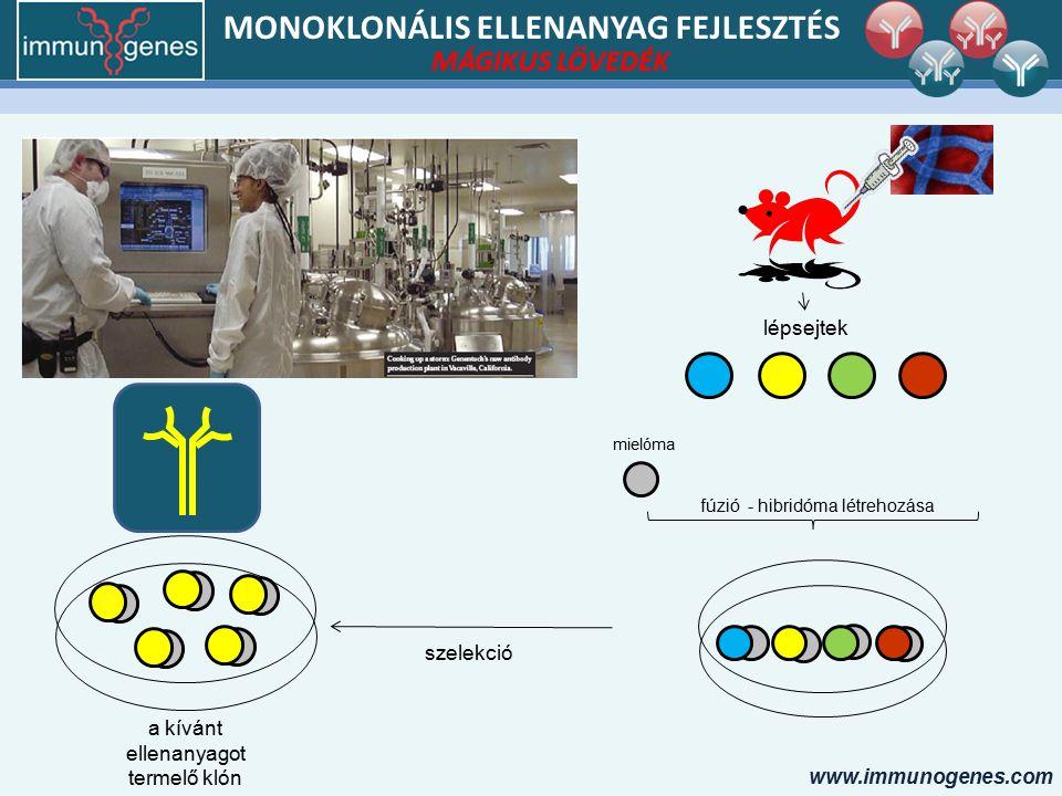 www.immunogenes.com MONOKLONÁLIS ELLENANYAG FEJLESZTÉS lépsejtek mielóma fúzió - hibridóma létrehozása a kívánt ellenanyagot termelő klón szelekció MÁGIKUS LÖVEDÉK