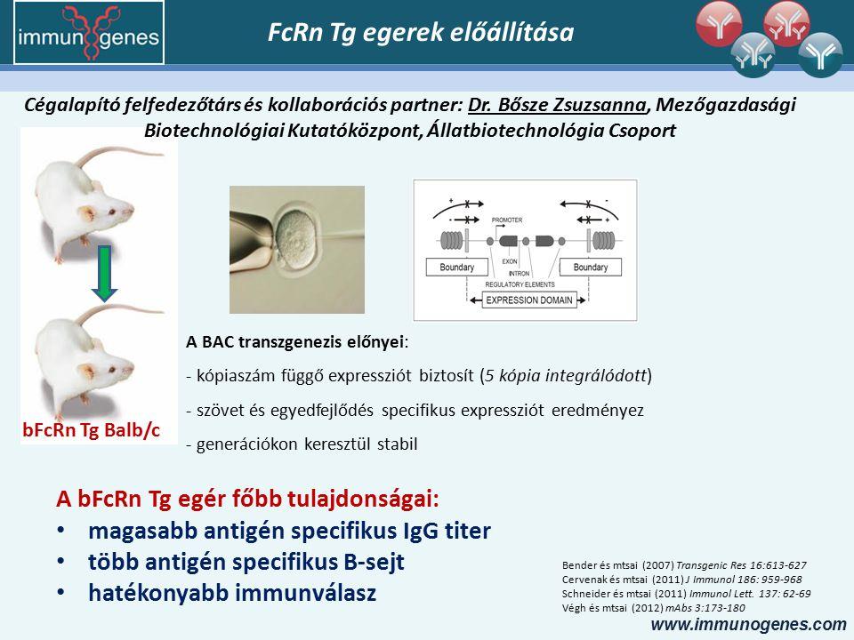 www.immunogenes.com bFcRn Tg Balb/c A BAC transzgenezis előnyei: - kópiaszám függő expressziót biztosít (5 kópia integrálódott) - szövet és egyedfejlődés specifikus expressziót eredményez - generációkon keresztül stabil A bFcRn Tg egér főbb tulajdonságai: magasabb antigén specifikus IgG titer több antigén specifikus B-sejt hatékonyabb immunválasz FcRn Tg egerek előállítása Bender és mtsai (2007) Transgenic Res 16:613-627 Cervenak és mtsai (2011) J Immunol 186: 959-968 Schneider és mtsai (2011) Immunol Lett.