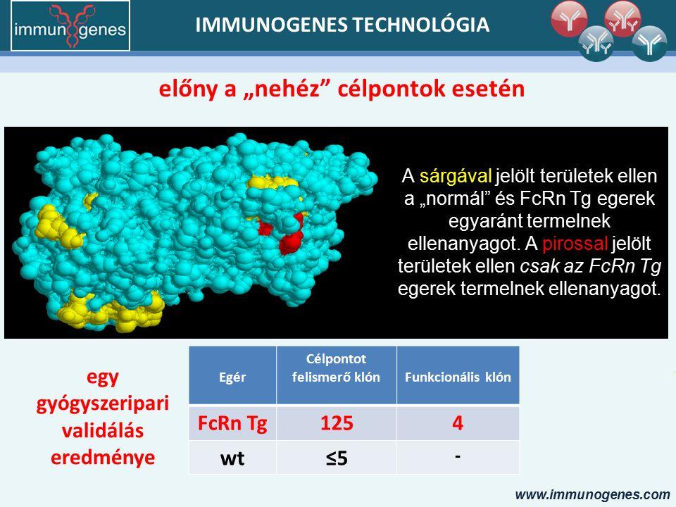 """www.immunogenes.com IMMUNOGENES TECHNOLÓGIA előny a """"nehéz célpontok esetén A sárgával jelölt területek ellen a """"normál és FcRn Tg egerek egyaránt termelnek ellenanyagot."""