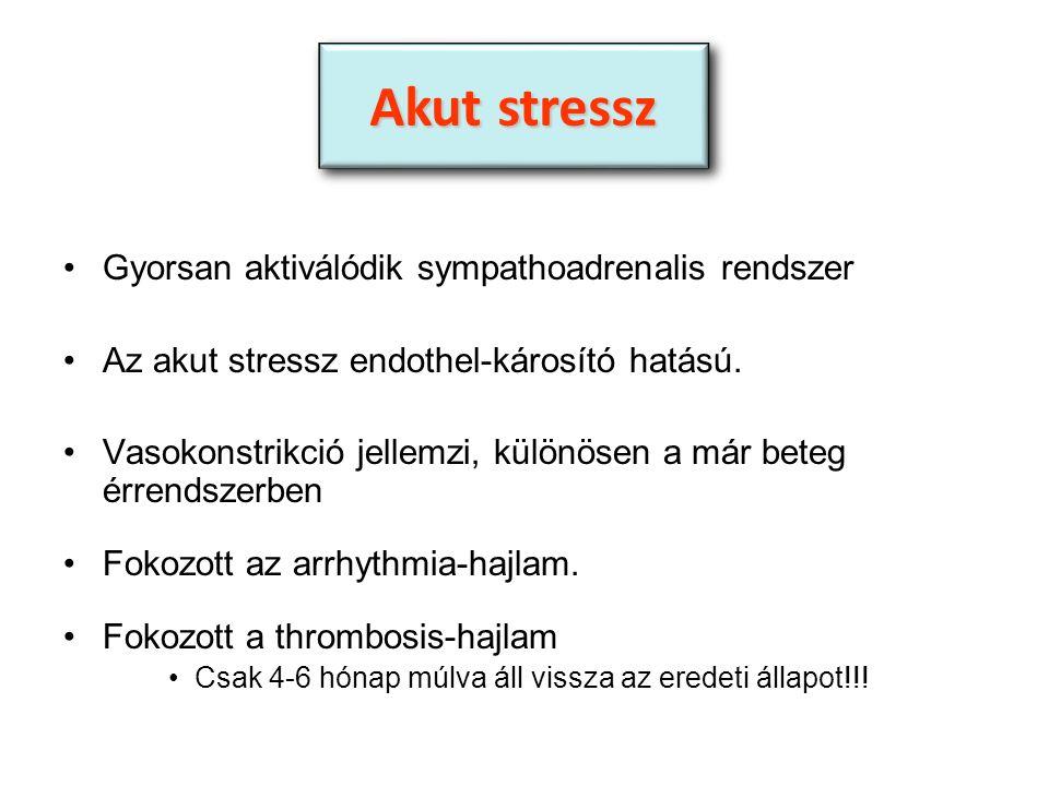 Gyorsan aktiválódik sympathoadrenalis rendszer Az akut stressz endothel-károsító hatású.