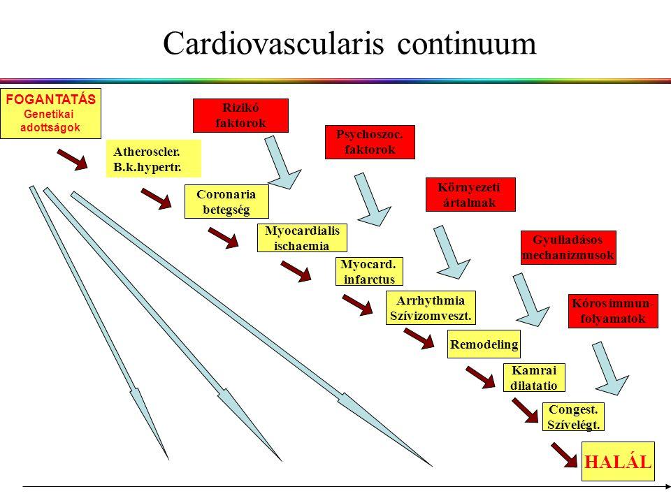 Cardiovascularis continuum Atheroscler.B.k.hypertr.