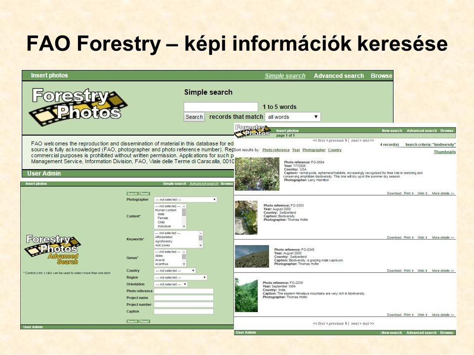 FAO Forestry – képi információk keresése 43