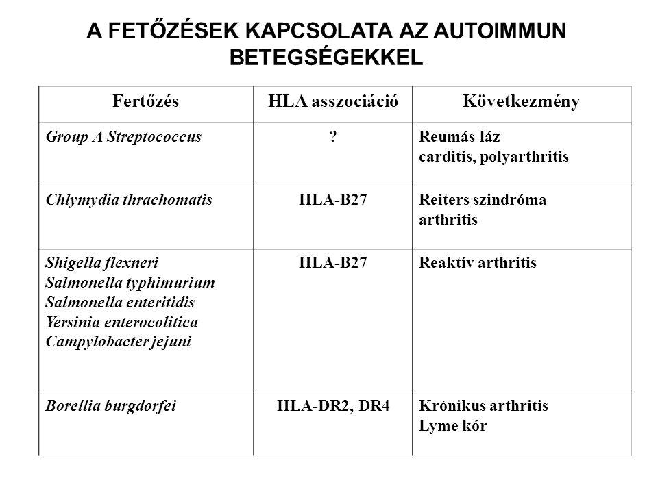 A FETŐZÉSEK KAPCSOLATA AZ AUTOIMMUN BETEGSÉGEKKEL FertőzésHLA asszociációKövetkezmény Group A Streptococcus Reumás láz carditis, polyarthritis Chlymydia thrachomatisHLA-B27Reiters szindróma arthritis Shigella flexneri Salmonella typhimurium Salmonella enteritidis Yersinia enterocolitica Campylobacter jejuni HLA-B27Reaktív arthritis Borellia burgdorfeiHLA-DR2, DR4Krónikus arthritis Lyme kór