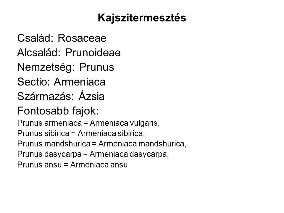 Kajszitermesztés Család: Rosaceae Alcsalád: Prunoideae Nemzetség: Prunus Sectio: Armeniaca Származás: Ázsia Fontosabb fajok: Prunus armeniaca = Armeniaca vulgaris, Prunus sibirica = Armeniaca sibirica, Prunus mandshurica = Armeniaca mandshurica, Prunus dasycarpa = Armeniaca dasycarpa, Prunus ansu = Armeniaca ansu