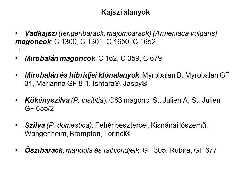 Kajszi alanyok Vadkajszi (tengeribarack, majombarack) (Armeniaca vulgaris) magoncok: C 1300, C 1301, C 1650, C 1652.