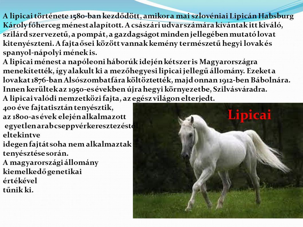 Lipicai A lipicai története 1580-ban kezdődött, amikor a mai szlovéniai Lipicán Habsburg Károly főherceg ménest alapított.