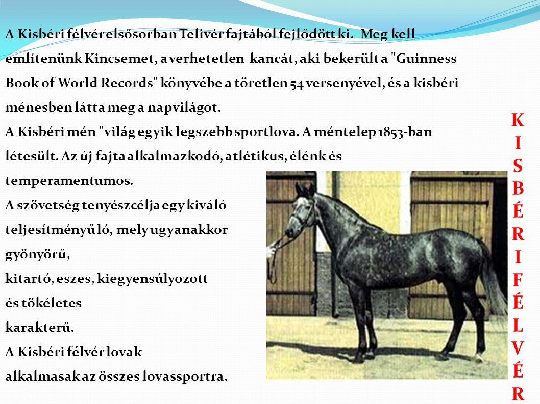 KISBÉRIFÉLVÉRKISBÉRIFÉLVÉR A Kisbéri félvér elsősorban Telivér fajtából fejlődött ki.