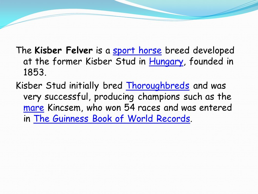 The Kisber Felver is a sport horse breed developed at the former Kisber Stud in Hungary, founded in 1853.sport horseHungary Kisber Stud initially bred Thoroughbreds and was very successful, producing champions such as the mare Kincsem, who won 54 races and was entered in The Guinness Book of World Records.Thoroughbreds mareThe Guinness Book of World Records