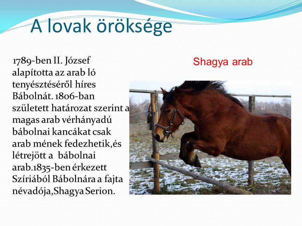 A lovak öröksége 1789-ben II. József alapította az arab ló tenyésztéséről híres Bábolnát.