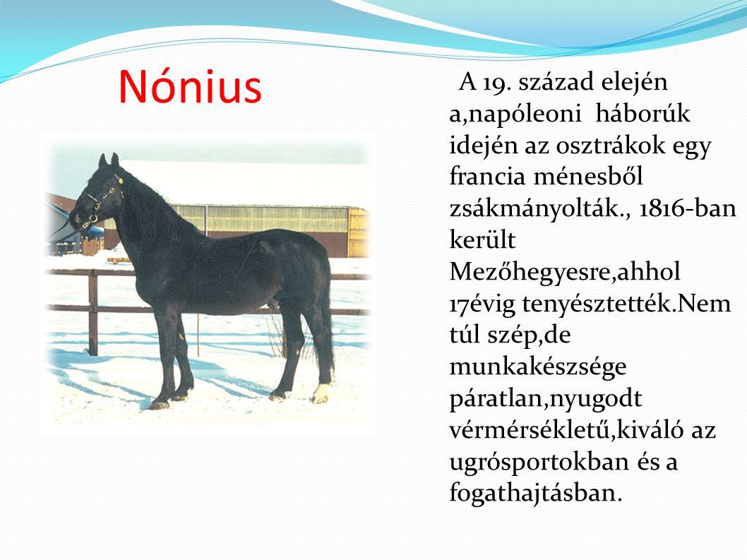 Nónius A 19.