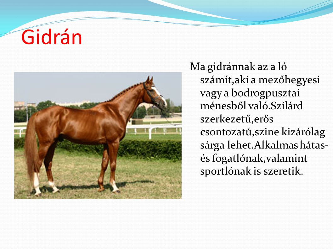 The Gidran, Gidrán, or Hungarian Anglo-Arab is a horse breed developed in Hungary from bloodstock that included the Arabian horse.