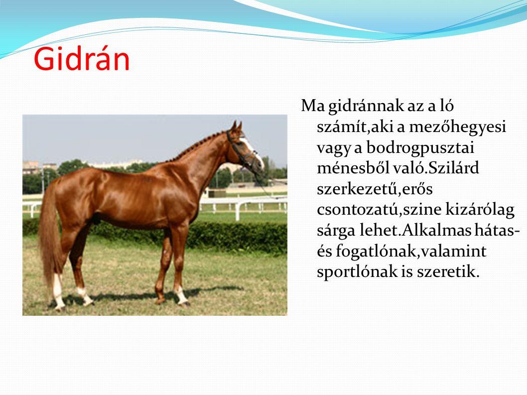Gidrán Ma gidránnak az a ló számít,aki a mezőhegyesi vagy a bodrogpusztai ménesből való.Szilárd szerkezetű,erős csontozatú,szine kizárólag sárga lehet.Alkalmas hátas- és fogatlónak,valamint sportlónak is szeretik.
