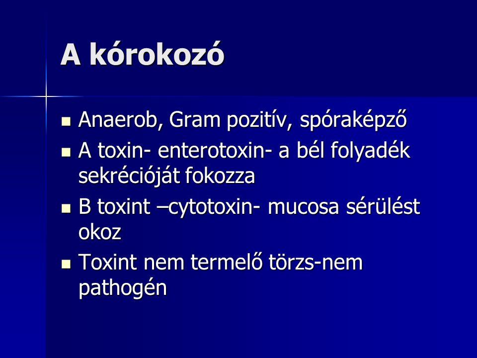 A kórokozó Anaerob, Gram pozitív, spóraképző Anaerob, Gram pozitív, spóraképző A toxin- enterotoxin- a bél folyadék sekrécióját fokozza A toxin- enterotoxin- a bél folyadék sekrécióját fokozza B toxint –cytotoxin- mucosa sérülést okoz B toxint –cytotoxin- mucosa sérülést okoz Toxint nem termelő törzs-nem pathogén Toxint nem termelő törzs-nem pathogén