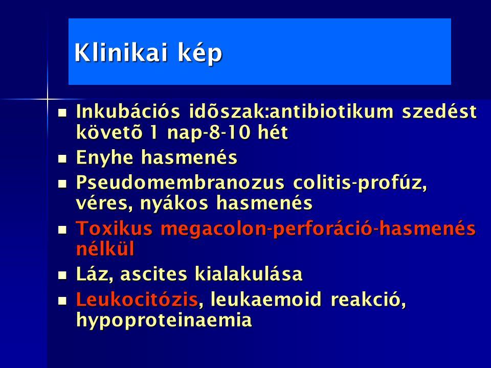 Klinikai kép Inkubációs idõszak:antibiotikum szedést követõ 1 nap-8-10 hét Inkubációs idõszak:antibiotikum szedést követõ 1 nap-8-10 hét Enyhe hasmenés Enyhe hasmenés Pseudomembranozus colitis-profúz, véres, nyákos hasmenés Pseudomembranozus colitis-profúz, véres, nyákos hasmenés Toxikus megacolon-perforáció-hasmenés nélkül Toxikus megacolon-perforáció-hasmenés nélkül Láz, ascites kialakulása Láz, ascites kialakulása Leukocitózis, leukaemoid reakció, hypoproteinaemia Leukocitózis, leukaemoid reakció, hypoproteinaemia