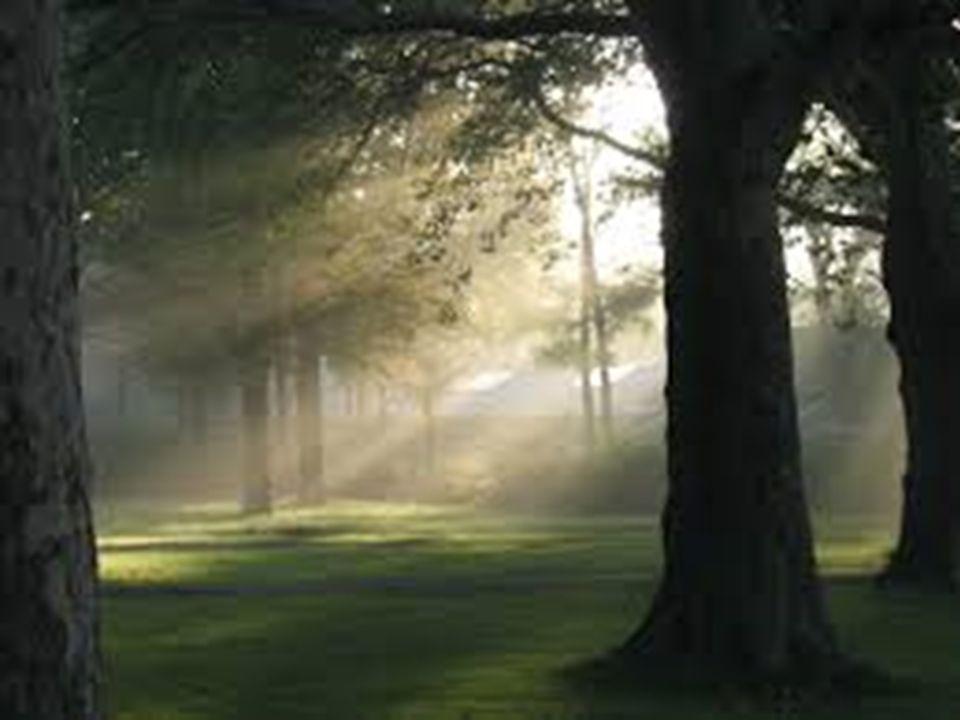 A fény útja nem látható A fény útja látható Fényforrás Valódi oldat Kolloid oldat