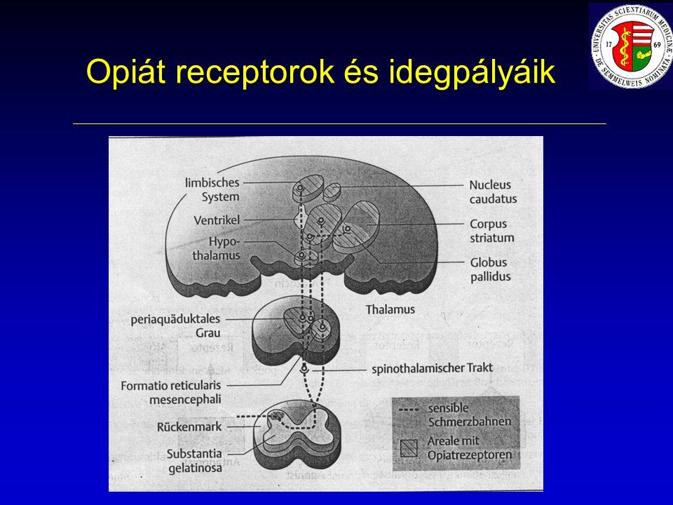 Opiát receptorok és idegpályáik