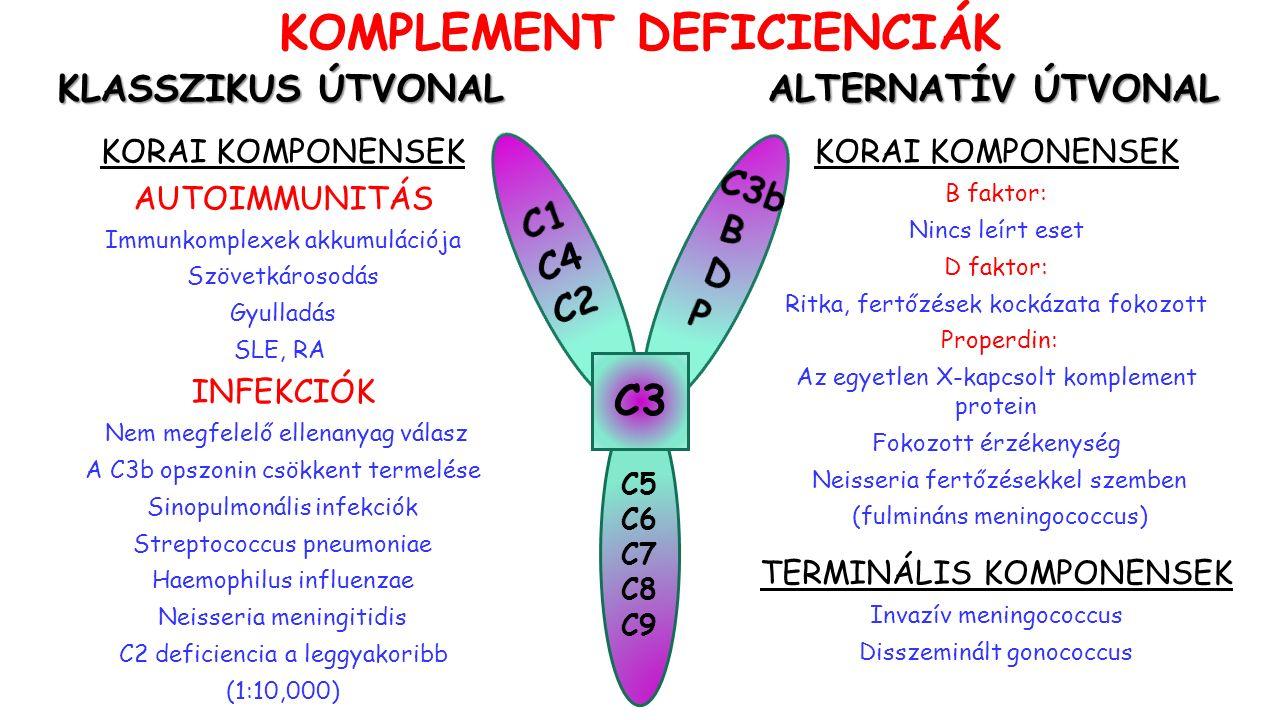 C5 C6 C7 C8 C9 C3 KORAI KOMPONENSEK AUTOIMMUNITÁS Immunkomplexek akkumulációja Szövetkárosodás Gyulladás SLE, RA INFEKCIÓK Nem megfelelő ellenanyag válasz A C3b opszonin csökkent termelése Sinopulmonális infekciók Streptococcus pneumoniae Haemophilus influenzae Neisseria meningitidis C2 deficiencia a leggyakoribb (1:10,000) KOMPLEMENT DEFICIENCIÁK KLASSZIKUS ÚTVONAL ALTERNATÍV ÚTVONAL KORAI KOMPONENSEK B faktor: Nincs leírt eset D faktor: Ritka, fertőzések kockázata fokozott Properdin: Az egyetlen X-kapcsolt komplement protein Fokozott érzékenység Neisseria fertőzésekkel szemben (fulmináns meningococcus) TERMINÁLIS KOMPONENSEK Invazív meningococcus Disszeminált gonococcus